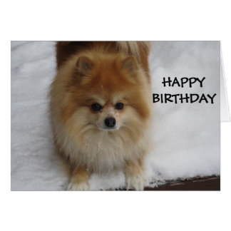 HAPPY BIRTHDAY SAYS THE POMERANIAN CARD