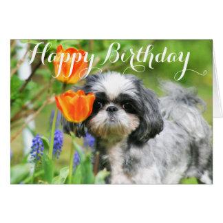 Happy Birthday Shitzu Girl Greeting Card