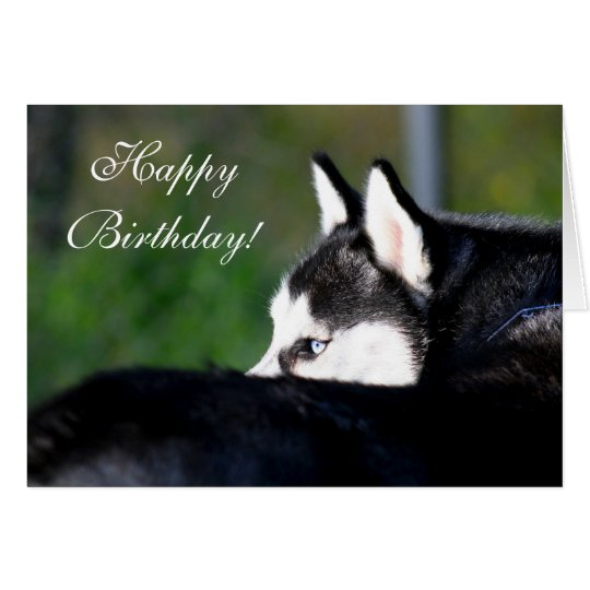 Happy Birthday Siberian Husky greeting card