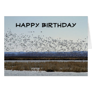 Happy Birthday Snow Geese at Squaw Creek Refuge Card