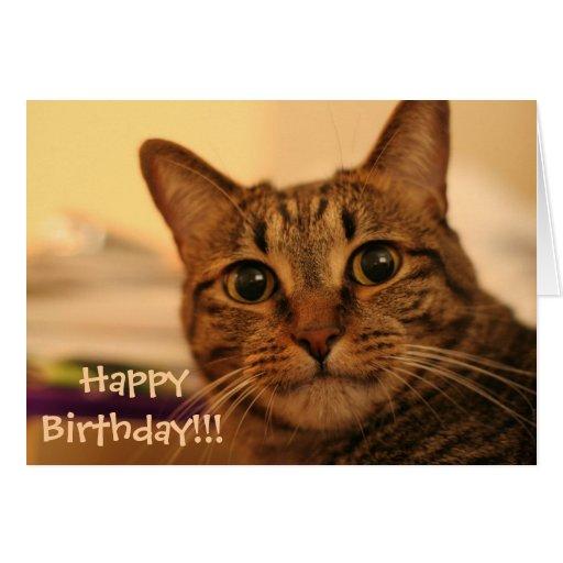 happy birthday tabby cat card  zazzle