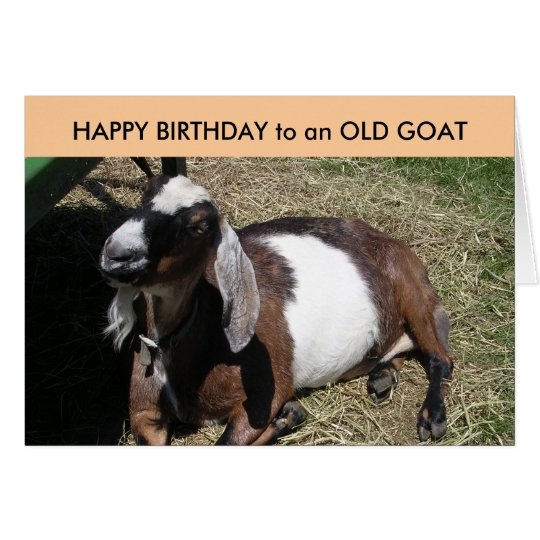 HAPPY BIRTHDAY to an OLD GOAT Card
