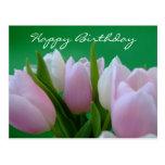 Happy Birthday - Tulips Postcard