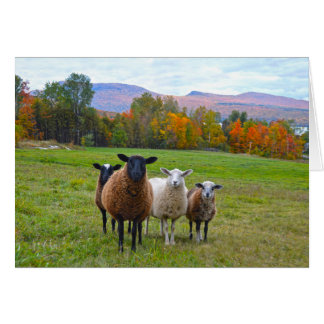 Happy Birthday Vermont Sheep in Autumn Greeting Card