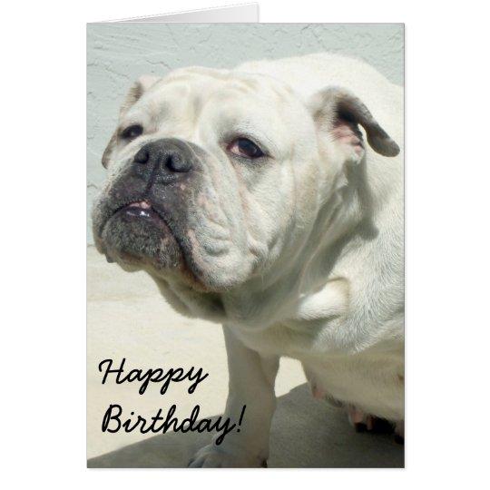 Happy Birthday White Bulldog greeting card