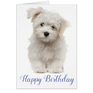 Happy Birthday White Maltese Puppy Dog Blue Card