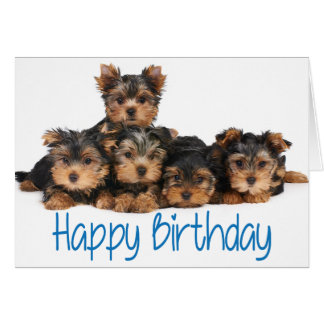 Happy Birthday Yorkshire Terrier Puppy Dog Blue Card