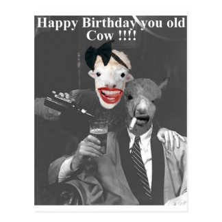 Happy Birthday you old Cow! Postcard