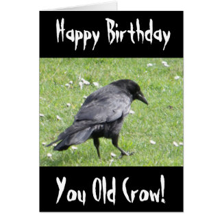 Happy Birthday You Old Crow Insult Birthday Card