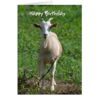 Happy Birthday You Old Goat, Greeting Card