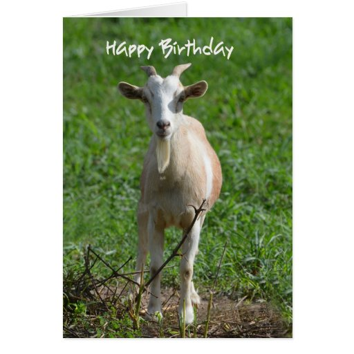 Happy Birthday You Old Goat, Cards