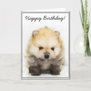 Pomeranian Birthday Cards Zazzle Uk