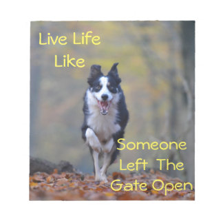 Happy Border Collie dog running and playing Notepad