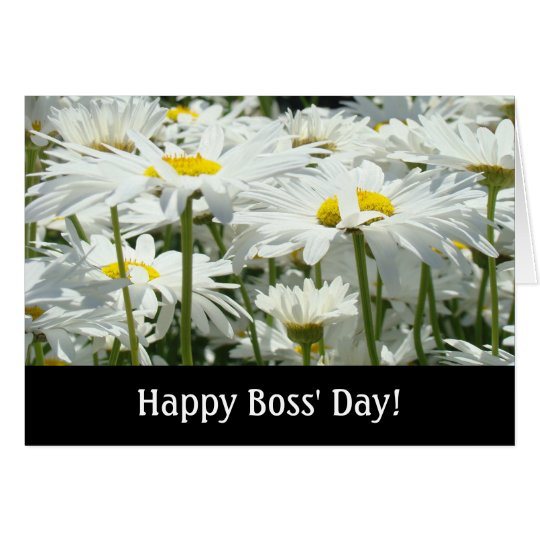Happy Boss' Day! cards White Daisy Flowers Bosses