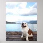 happy bull dog sitting on deck near lake poster