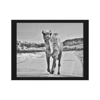 Happy Camel Canvas Print