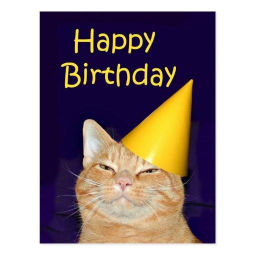 Birthday Orange Cat: Happy Cat Happy Birthday