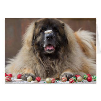 happy cookie Leonberger Card