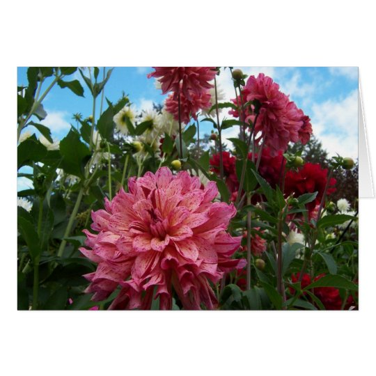 Happy Dahlias Card