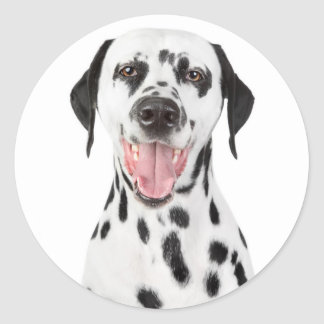 Happy Dalmatian Puppy Dog Greeting Stickers