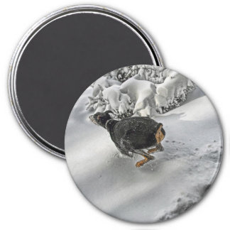 Happy Doberman in Snow 7.5 Cm Round Magnet