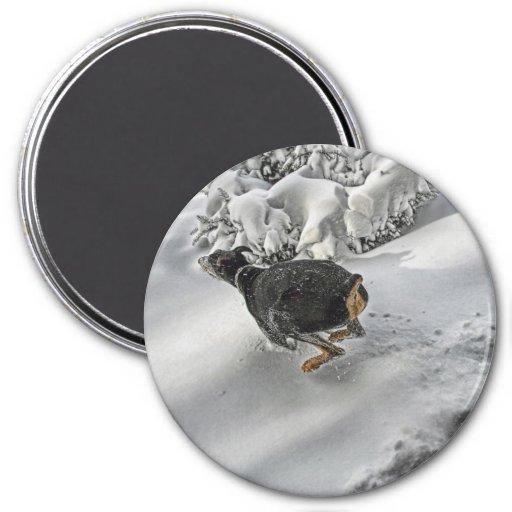 Happy Doberman in Snow 7.5 Cm Round Magnet