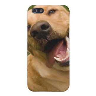 Happy Dog Golden Lab Retriever iPhone Case iPhone 5/5S Case