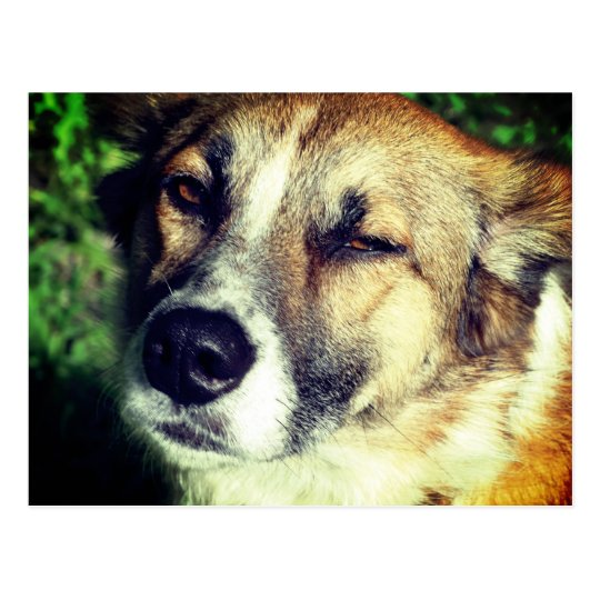 Happy Dog in the sun Photo postcard