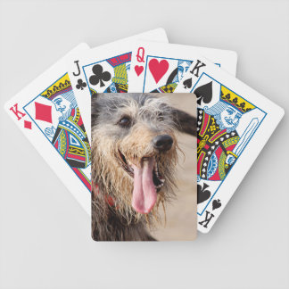 Happy dog on a beach bicycle playing cards
