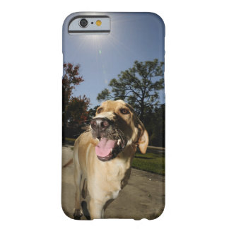 Happy dog running around exercising outdoors in barely there iPhone 6 case