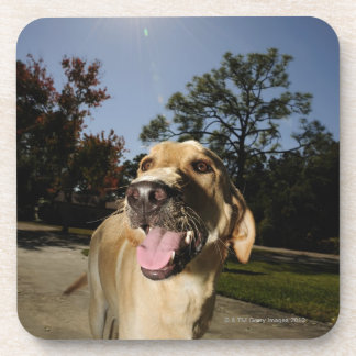 Happy dog running around exercising outdoors in beverage coasters