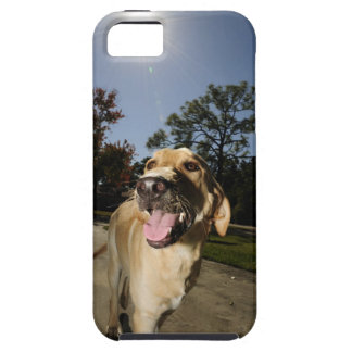 Happy dog running around exercising outdoors in iPhone 5 covers
