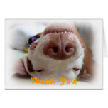 Happy Dog Thank You Greeting Card