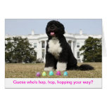 Happy Easter - Bo Obama Greeting Card