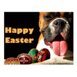 Happy Easter Boxer Dog postcard