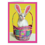 Happy Easter Bunny Cat Cards