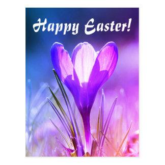 Happy Easter, crocus Postcard