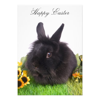 Happy Easter Announcements