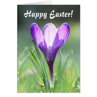 Happy Easter! Purple Crocus in spring 02.T Card