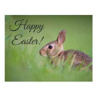 Happy Easter Real Bunny Photo Script Typography Postcard
