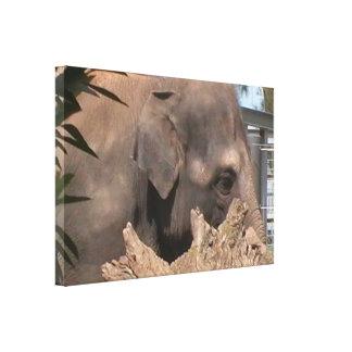 Happy Elephant Canvas Print