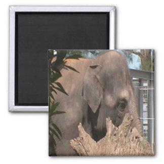 Happy Elephant Magnets