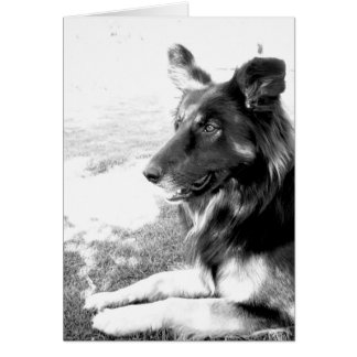 Happy Father's Day Belgian Shepherd Dog Card