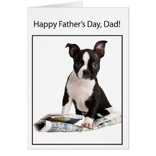 Happy Father's Day from Boston Terrier Dog, to