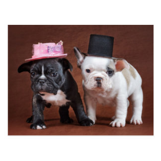 Happy French Bulldog Couple Postcard
