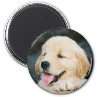 Happy Golden Retriever Puppy Decor Magnet