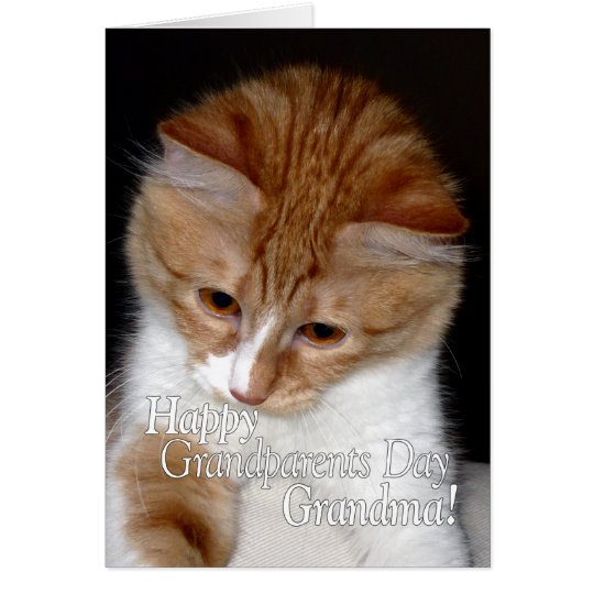 Happy Grandparents Day Grandma Cute Cat Card