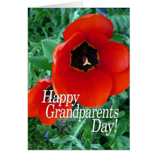 Happy Grandparents Day - Poppy Flowers Card