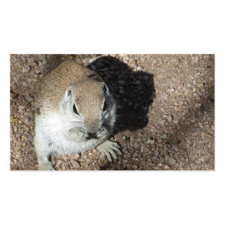 Happy Ground Squirrel Pack Of Standard Business Cards