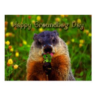 Happy Groundhog Day Eating Flower Postcard